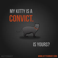is your kitty a convict the kitty convict project