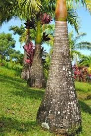 Different Types Of Garden - so many different types of palm tree u0027s i learned a lot picture