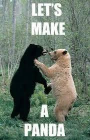 Panda Meme - let s make a panda kill the hydra