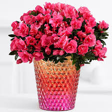 flower pic valentine s day flower arrangements delivery for valentine s day 2018