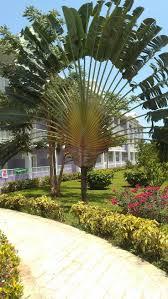 16 best jamaica images on pinterest caribbean montego bay