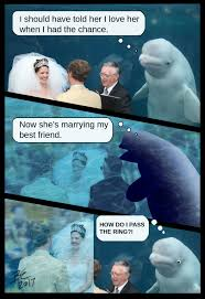 Meme Wedding - beluga whale photobombs wedding becomes the internet s hot new