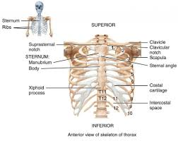 Human Anatomy And Physiology Final Exam Human Anatomy And Physiology Exam 2 Periodic Tables