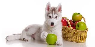 the benefits of high fiber dog food the munch zone