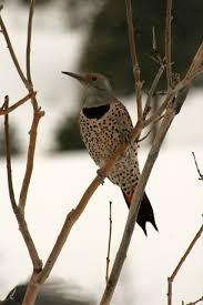 woodpeckers wear helmets inspired by venice