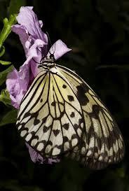 313 best ladybugs u0026 butterflies images on pinterest