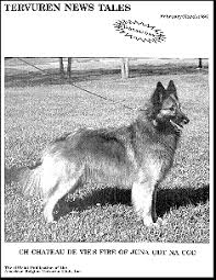 belgian sheepdog club of america national specialty join abtc abtc