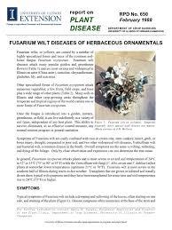 fusarium wilt diseases of herbaceous ornamentals root plants