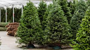 bay area christmas tree farms say high prices due to shortage