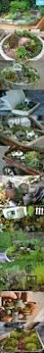 236 best dish gardens images on pinterest fairies garden mini