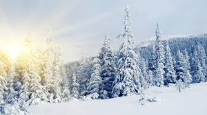 trees in snow images search lovely