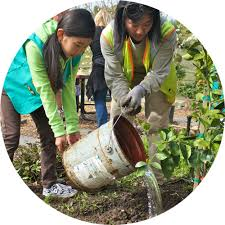 our city forest planting the future