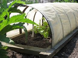best row covers protecting plants with garden row covers