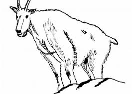 forest coloring pages coloring pages