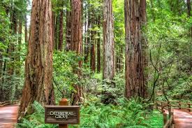 California forest images California redwood forests where to see the big trees jpg