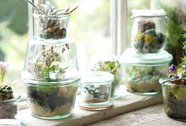 tiny terrariums the blog grow at terrain