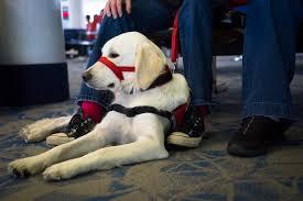asheville therapy dog training asheville service dog training