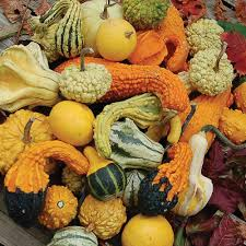 gourd mixture gourd seed savers exchange