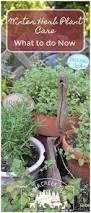 Herb Garden Winter - 1391 best herb gardens images on pinterest herbal medicine