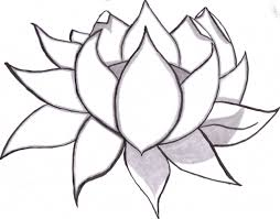 lotus flower pencil drawing 1000 images about flowers on pinterest