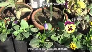 kitchen garden overview garden in home ideas march 2017 urdu hindi