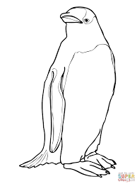 gentoo penguin coloring page free printable coloring pages