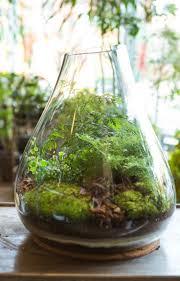 142 best plants images on pinterest plants succulent plants and