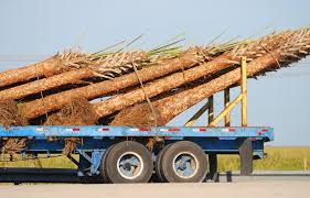 palm tree delivery stock photo image of back tree truck 3165506