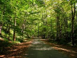 Georgia forest images Chattahoochee oconee national forests andrews cove campground jpg