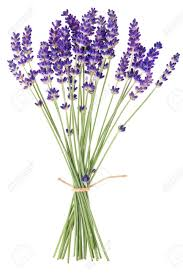 Lavender Bouquet Lavender Flowers On White Background Stock Photo Picture And