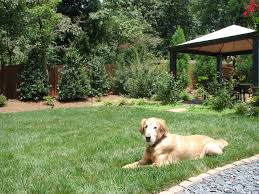 Dog Friendly Landscape Design Pictures