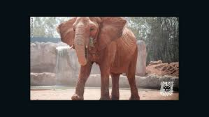 Blind Men And The Elephant Story For Children Killed After Morocco Zoo Elephant Threw Rock At Her Cnn