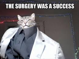 Success Cat Meme - surgery was a success dump a day