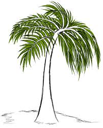 palm tree drawings cliparts co