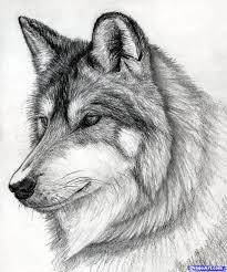 pencil sketches of wolves howling at the moon pencil drawings of