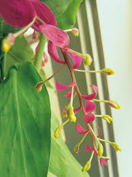 how to grow tropical plants indoors hgtv