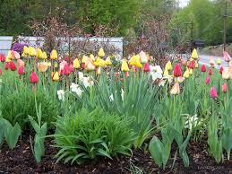 excellent idea perennial flower garden designs small perennial