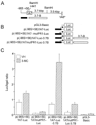involvement of hepatocyte nuclear factor 1 in the regulation of