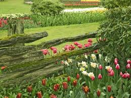 106 best gardens and flowers hd wallpapers images on pinterest