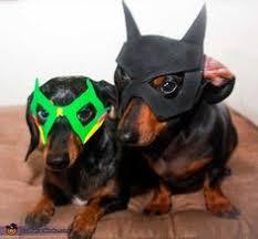 Batman Robin Dog Halloween Costumes Batman Pet Cape Google Pet Ideas Robins