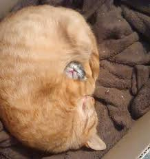 21 sleepy kittens that will melt your heart