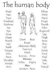 worksheet the human body part 1