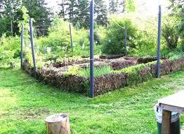 backyard vegetable garden designs home best concept balcony ideas