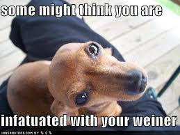 Weiner Dog Meme - coolest 2289 best all things wiener dog images on pinterest
