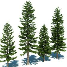 deciding between deciduous and evergreen trees on your property