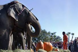 photo gallery circus elephants in ta bay a history and