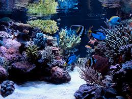 Aquascape Reef Oregonreef Com