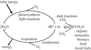 is light a form of energy from natural to artificial photosynthesis journal of the royal