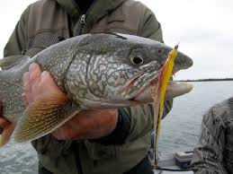 fishing in the fall fly fishing for lake trout where to fish