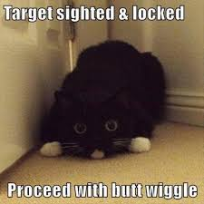 Cats Memes - debra on twitter new post impressive inspiration for top 30 funny
